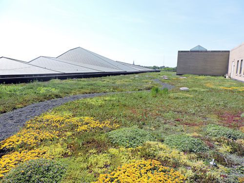 Main Library Green Roof