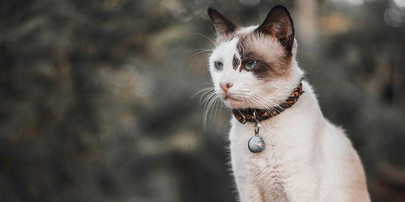 Cat looking pensive