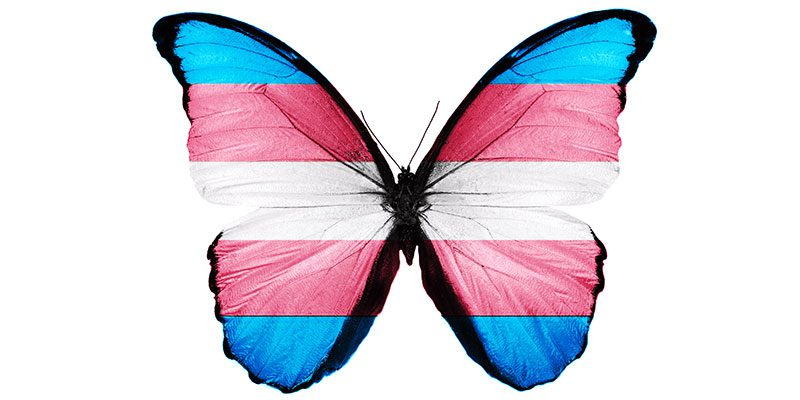Trans flag butterfly