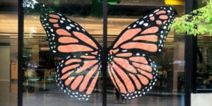 Butterfly painting on window