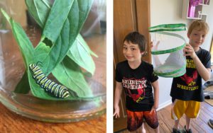 Monarch caterpillar with leaves, and two boys with butterfly cage